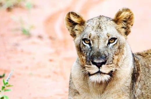 Safaris at Mawimbi are scening, wild and peaceful