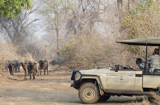 Exciting safaris in the Lower Zambezi Valley