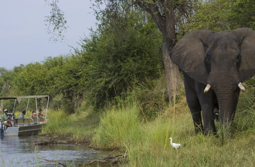 Explore the intriguing world of elephants, from the comfort of a vehicle, boat or canoe
