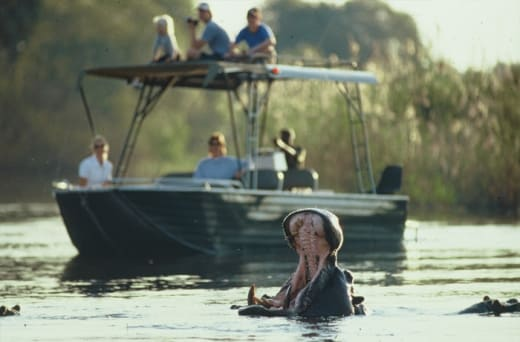Embark on a epic River Safari with expert guides and purpose-built river boat