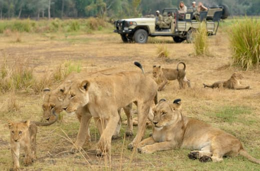 Exciting game drives, walking safaris, canoe trips, boat cruises, fishing and hide safaris