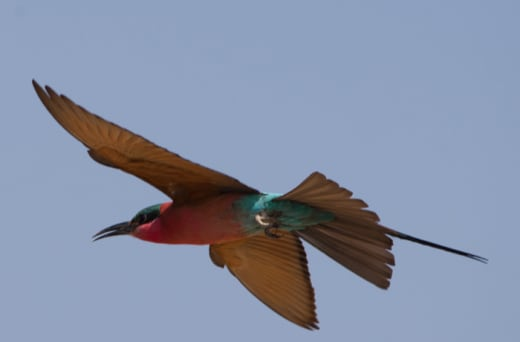 The Lower Zambezi valley offers a wide range of bird habitats