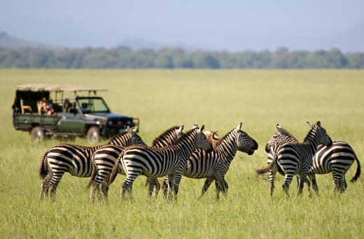 If Zambia is on your bucket list then let Memorable Journeys plan a safari that is unforgettable