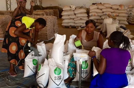 Quality certified legume seeds suited to small-scale farmers