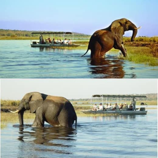 Game drive and river cruise package at Chobe National Park