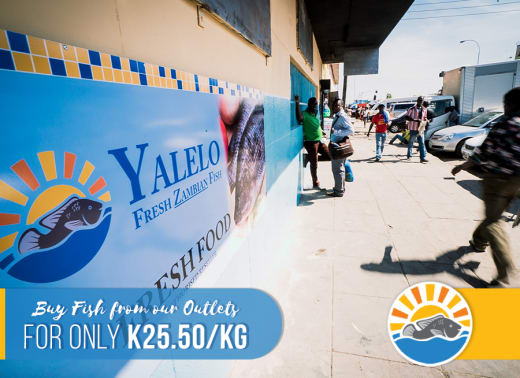 Offer on fresh tilapia fish