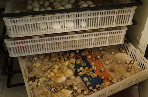 Quality poultry rearing equipment