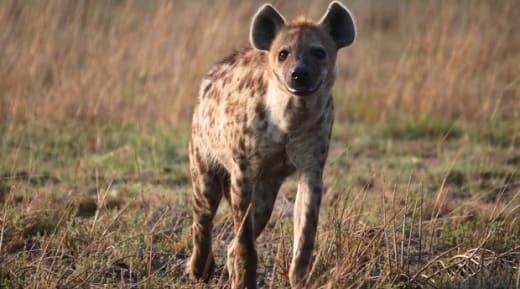 5% off Liuwa safari bookings