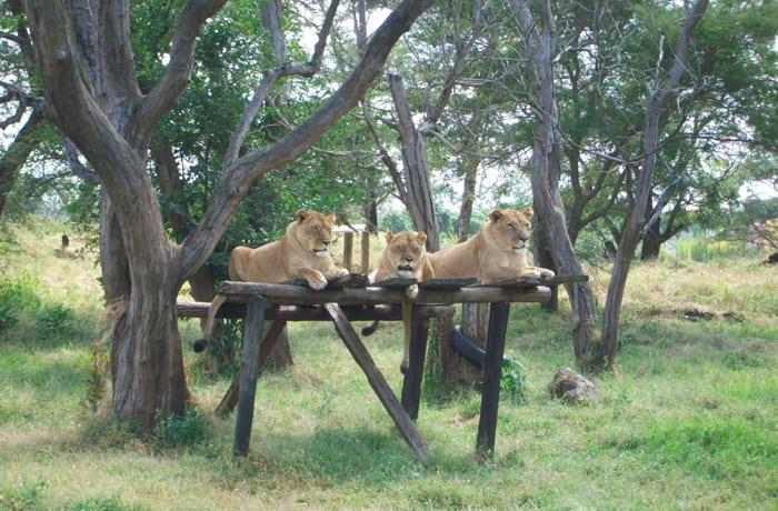 Animal sanctuaries image