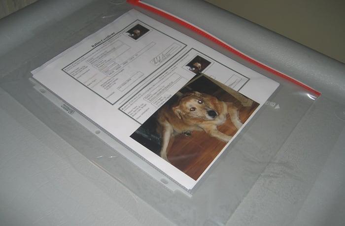 Animal transport image