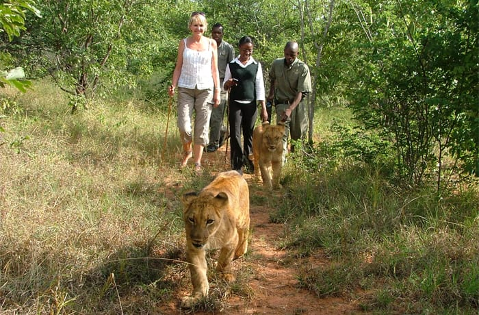 Animal encounter image