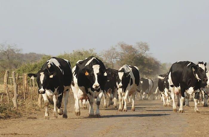 Livestock image