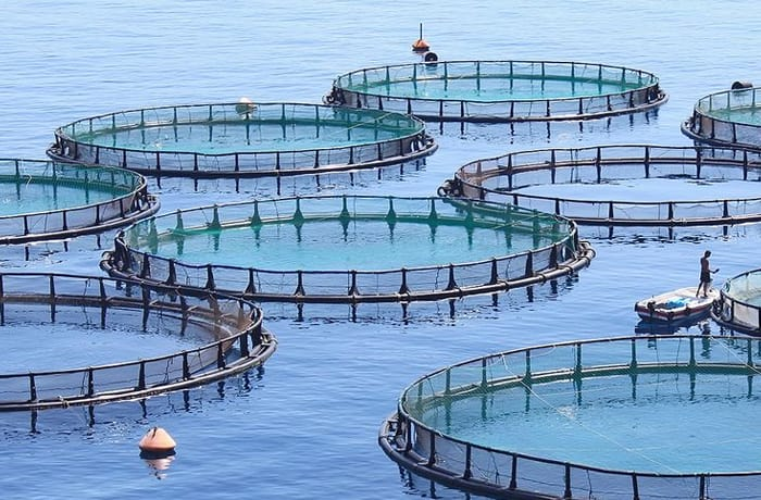 Fish farming image