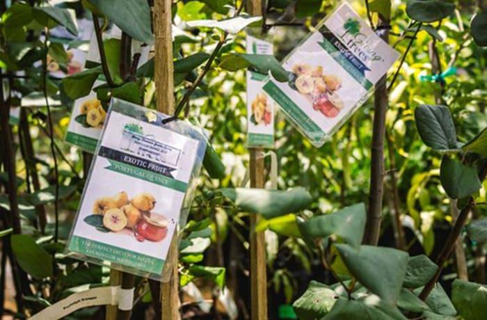 Garden centres image