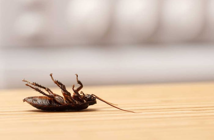 Pest control - 0