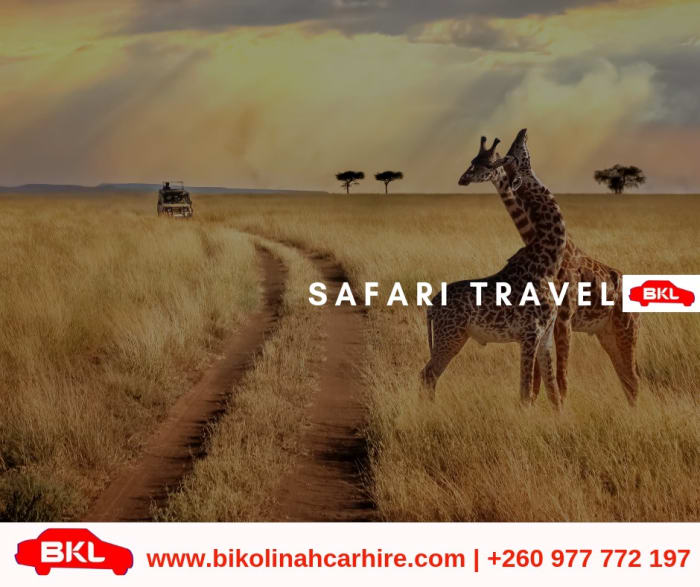 Planning a safari travel?