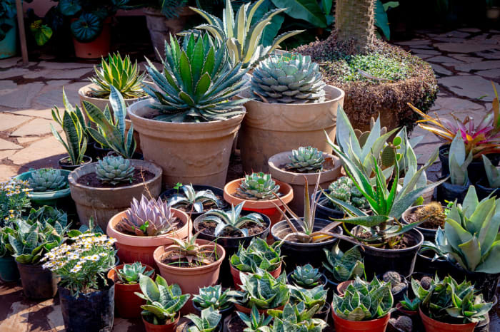 Add a little colour to your garden/backyard