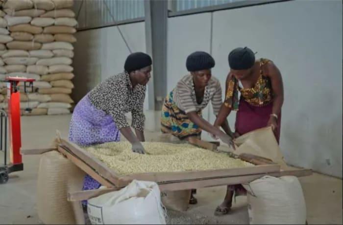 Major grain buyer in Zambia