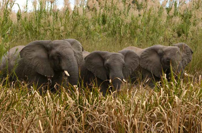 Guided game drives and safaris are arranged