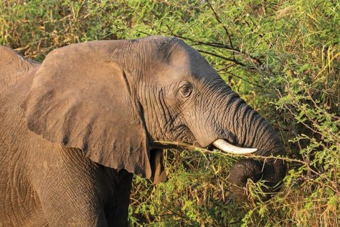 Mosi-Oa-Tunya National Park game drives from K550
