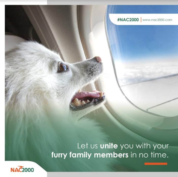Let NAC2000 unite you with your furry family in no time