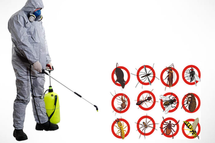 Engage Pyanga for all pest termination solutions