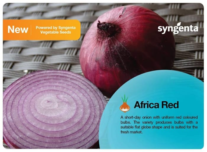 Introducing the newest Onion! Africa Red F1