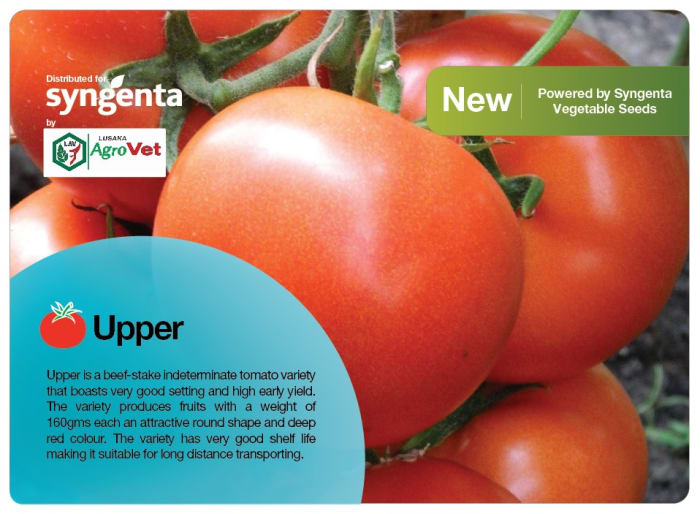 Say hello to the newest Syngenta tomato!