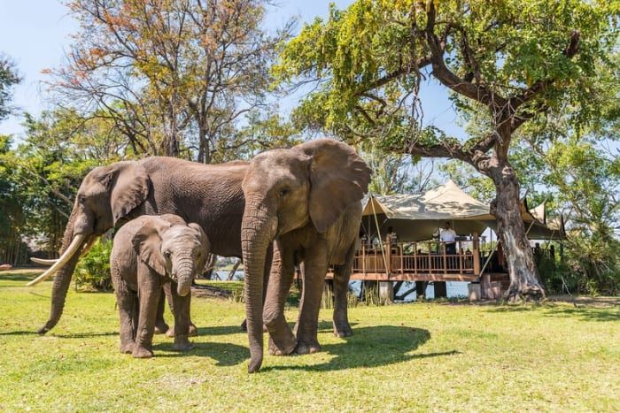 The Elephant Cafe and other activities available