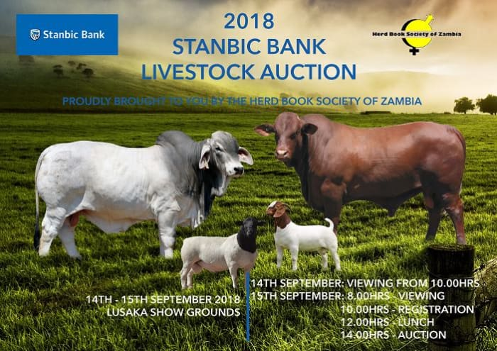 Stanbic Bank Livestock Auction