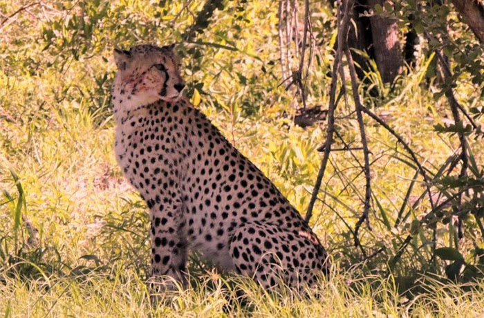 Relax and enjoy the flora and fauna of the African bush