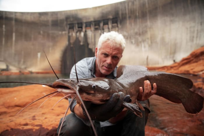 The vundu is the largest true freshwater fish in southern Africa