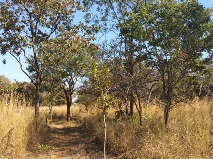 70Ha farm for sale in Chisamba