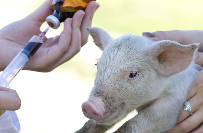 Medical services and surgeries for your farm animals