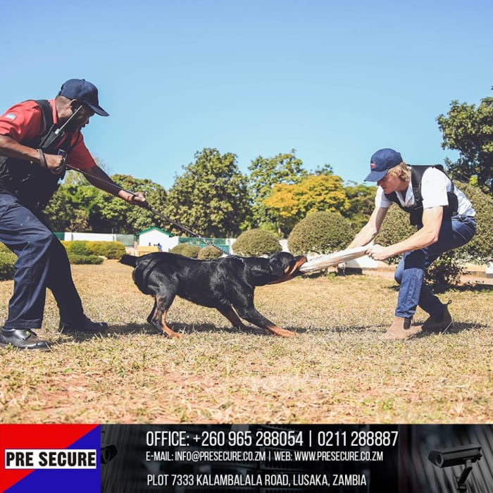 Hire a professional security K-9 unit for your event