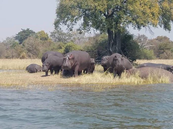 Kafue National Park package at Shiluwe Safari Lodge