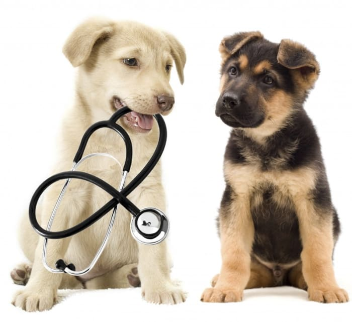Quality care for your pet