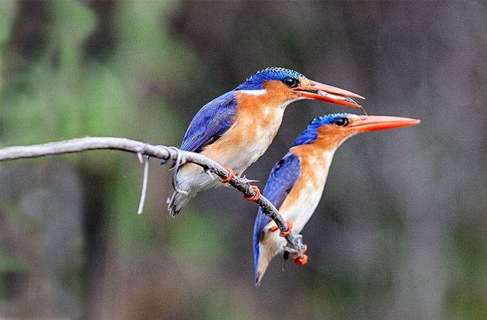 378 species of birds have been recorded in The Lower Zambezi