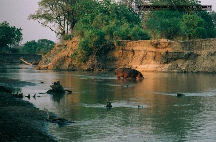50 Kilometers north of Kasanka are the vast Bangweulu Wetlands