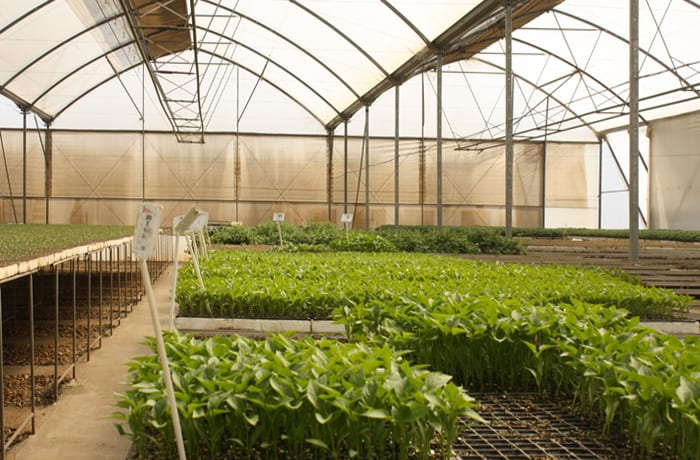 Leading supplier of seedlings countrywide