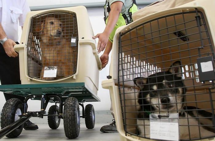 Domestic and international door-to-door pet travel service