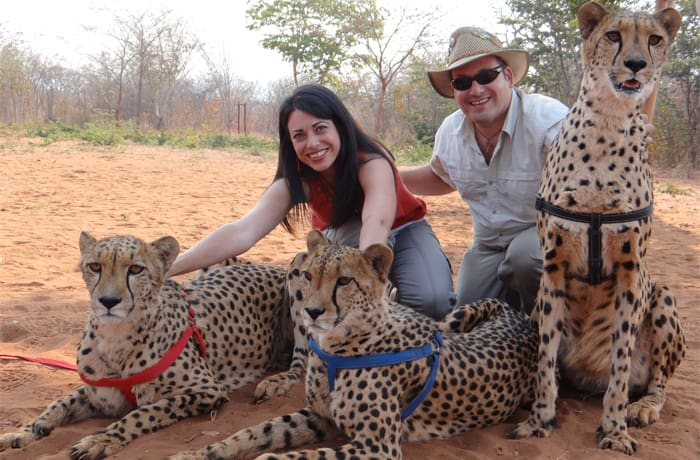 Animal encounter