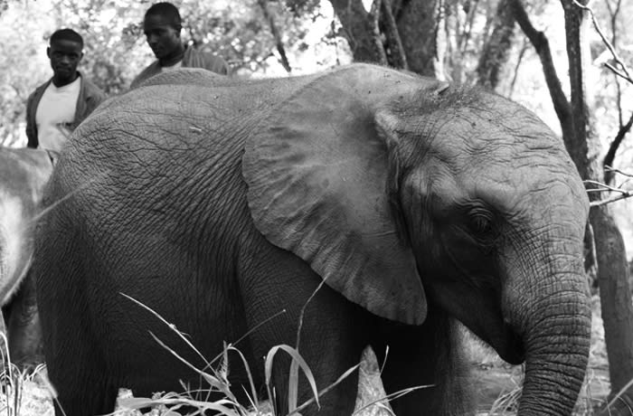 Lodge guests offered fully inclusive Elephant Experience package