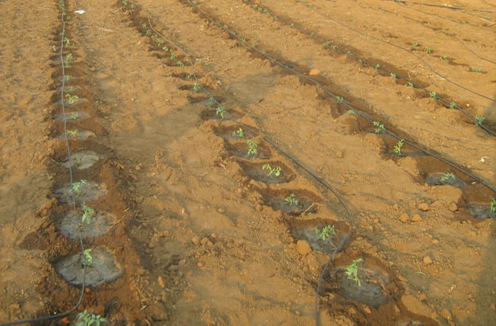 Supplying irrigation systems for Zambia's agricultural sector