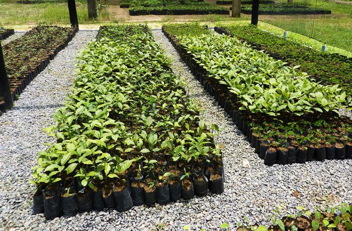 Tree and plant nurseries
