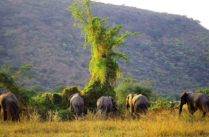 One of the last true wilderness areas in Africa