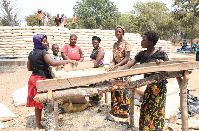 Source maize from suppliers, traders and farmers