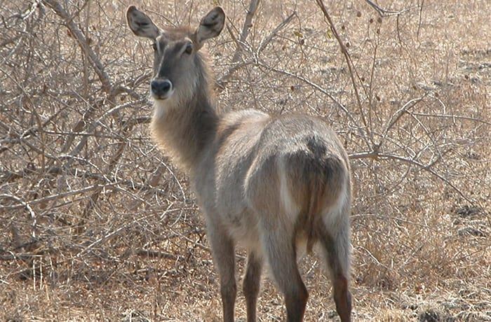 Rich forest wildlife with amazing safari opportunities