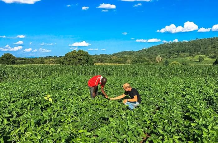 Trains farmers to produce quality legume seeds