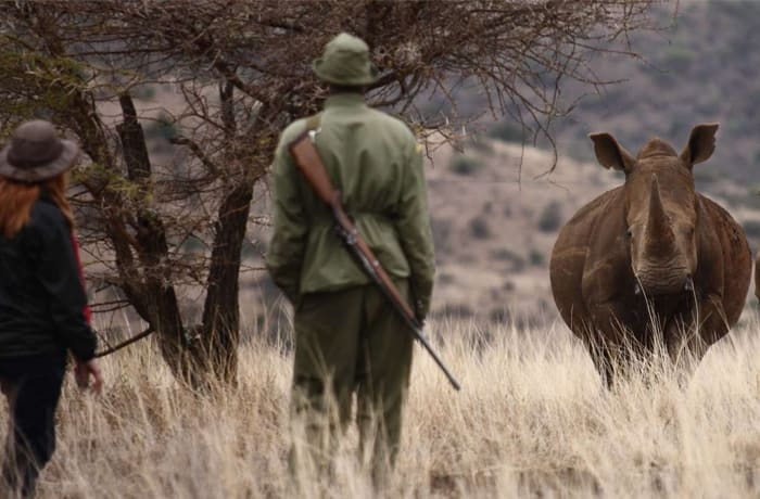 Breathtaking encounters with the endangered white rhino